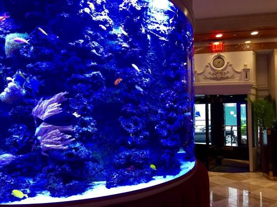 bistango (fish tank)
